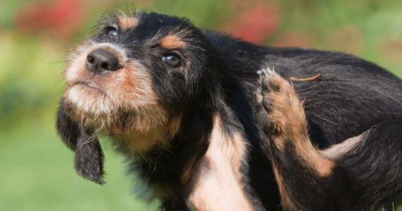 If Your Dog Has Painful Skin Itchiness, Put This In Their Food!