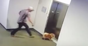 Man Rushes To The Rescue When A Pomeranian's Leash Gets Trapped In Elevator Doors
