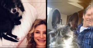 Kevin Bacon And Kyra Sedgwick Fill Their Home With Pitbulls And Rescue Dogs