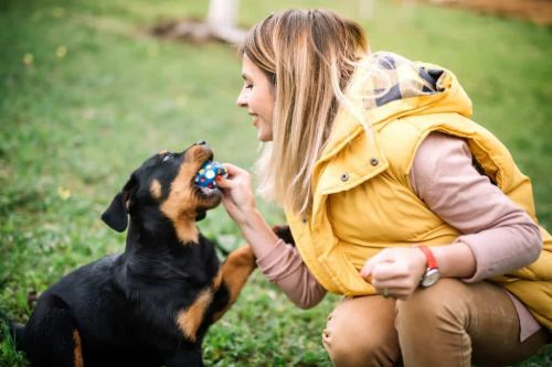 What Are The Benefits Of Agility Training For Your Rottie?