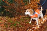 Dog Walking: How to Keep Your Dog Safe During Hunting Season