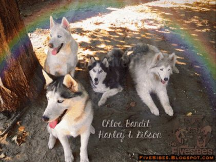 A Visit From North of the Rainbow Bridge on a FlashbackFriday
