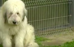 Dog Refuses To Break His Bond With Dead Owner Even After Five Years