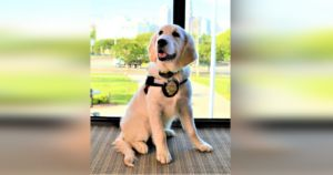 Fire Department Therapy Dog Sniffs Out Her Coworkers' Stress