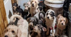 91 Dogs And 21 Cats Rescued From Filthy, Neglectful Household