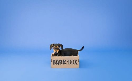 How To Train Your New Dog To Be A Good Boy Or Girl