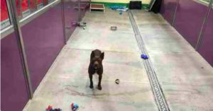Shelter Adopts All But One Of Its 200 Animals - This Pup Needs a Home!
