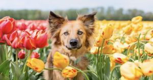 Fearful Rescue Dog Finds Comfort In Flowers