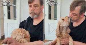Mark Hamill's Dog Is The Breakout Star Of His First TikTok