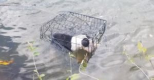 Teacher Who Saved Puppy Left To Die In A Lake Plans To Bring Her Home Forever