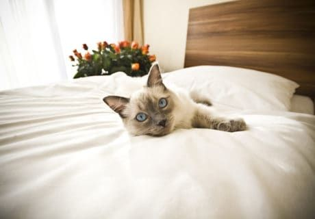 Nine Pet Friendly Hotel Chains that Welcome Cats