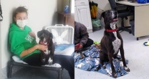 Sweetest Senior Dog Has Been Waiting 7 Years For His Forever Home