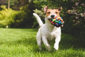 Three Secrets to Safe & Effective Exercise for Your Dog