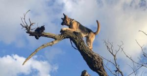Large Dog Gets Stuck In Tree After Chasing Cat