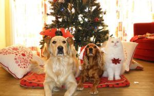 Could Your Christmas Tree Be Hazardous To Your Pet's Health?