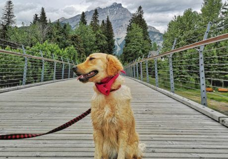 Weekly Pet Travel Photo Challenge