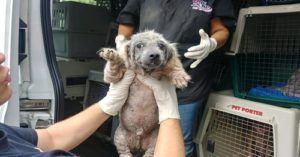 Over 45 Dogs Rescued From Hoarding Situation In Ohio