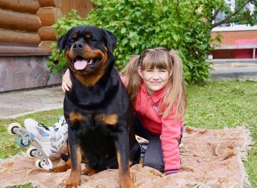 How to maintain the health and fitness of your Rottweiler - 11 easily executable ways