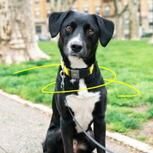 Fi GPS Tracker Brings Lost Dogs Home