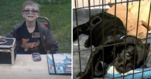 8-Year-Old Pokemon Trainer Sells Card Collection To Save His Puppy's Life