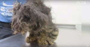 You Won't Believe The Transformation This Rescue Pup Makes After Being Saved