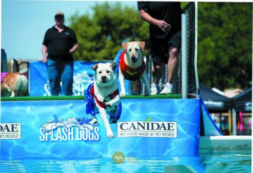 Dug Up at Dogster April 2020 Dog Events
