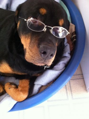 11 Rottweiler Facts People Understand Better Than Anyone