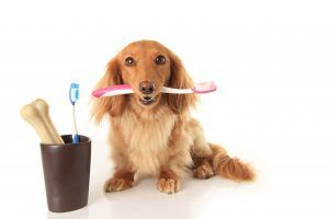 Dog Dental Treats and Chews, What You Need to Know About Your Dog's Oral Health