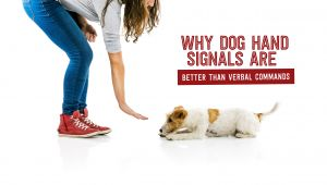 Why Dog Hand Signals are Better Than Verbal Commands