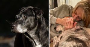 """""""Miracle"""" Hospice Dog Passes Away - But Her Family Is Turning Heartache Into Hope For Another Dog In Need"""
