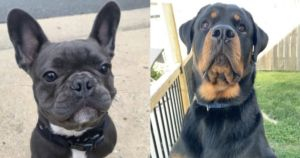 """8 Dogs Die Of Extreme Heat During """"Freak Accident"""""""