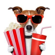 Dog Friendly Outdoor Movies in Seattle - COVID-19 Edition