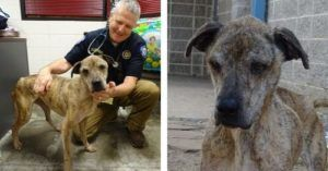Agatha Has Fought For Survival For So Long. Let's Find Her A Forever Home