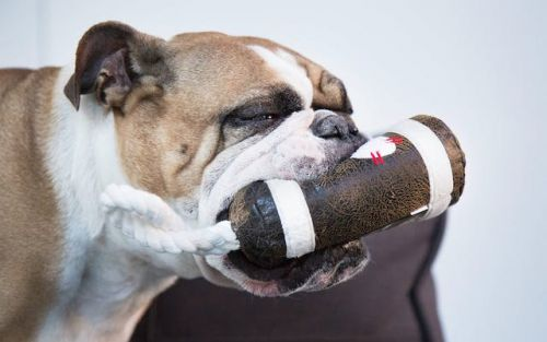 What Are The Best Toys For Bulldogs?