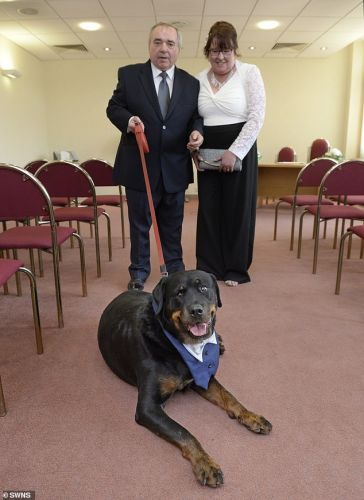 A Protective Rottie And Best Man In A Wedding Saves His Owner From Slipping Into A Diabetic Coma