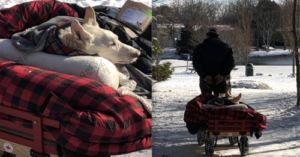 Man Walks His Paralyzed Dog In A Cozy Wagon