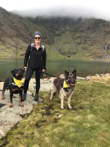 Rottweiler Rescue Dog Part Of An Arduous Trekking Challenge For Dogs Trust Salisbury