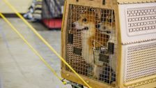 US Bans Bringing In Dogs From More Than 100 Countries Over Rabies Risk