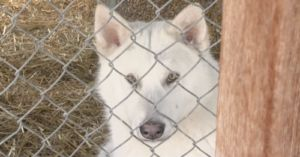 Montana Shelter Rescues Over 30 Huskies From The Wild