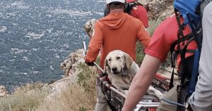 120-Pound Labrador Rescued From Mountain During Extreme Heat