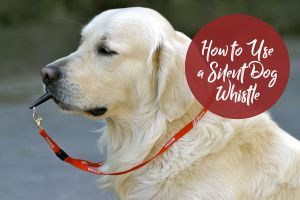 How to Use a Silent Dog Whistle