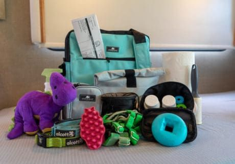 Pet Travel Essentials: Never Leave Home Without Them