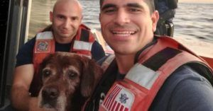 """Coast Guard Rescues """"Pup In Distress"""" Found Swimming Out To Sea"""