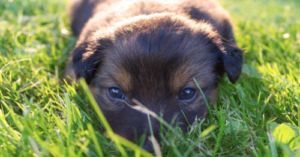 How Much and How Often to Feed Your Puppy