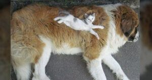 Cats Have No Problem Using Dogs For Their Own 'Purrposes'