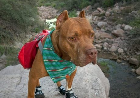 Which Dog Boots Are Best For Your Dog?