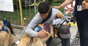 Golden Retriever Team Brings Comfort To Aftermath Of Condo Collapse
