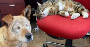 """Blind Dog and His """"Seeing-Eye Cat"""" Set Sights On New Forever Home"""