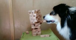 Multitalented Service Dog Also Plays Jenga