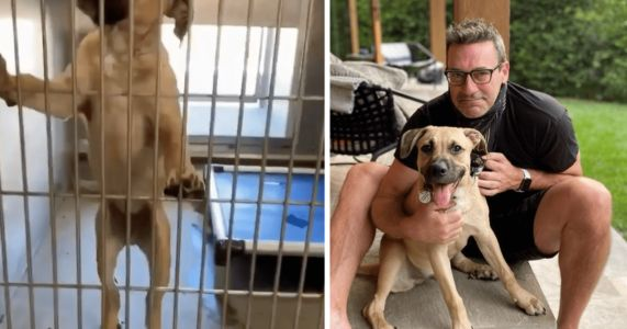 Jon Hamm Rescues A Dog Returned To The Shelter Twice